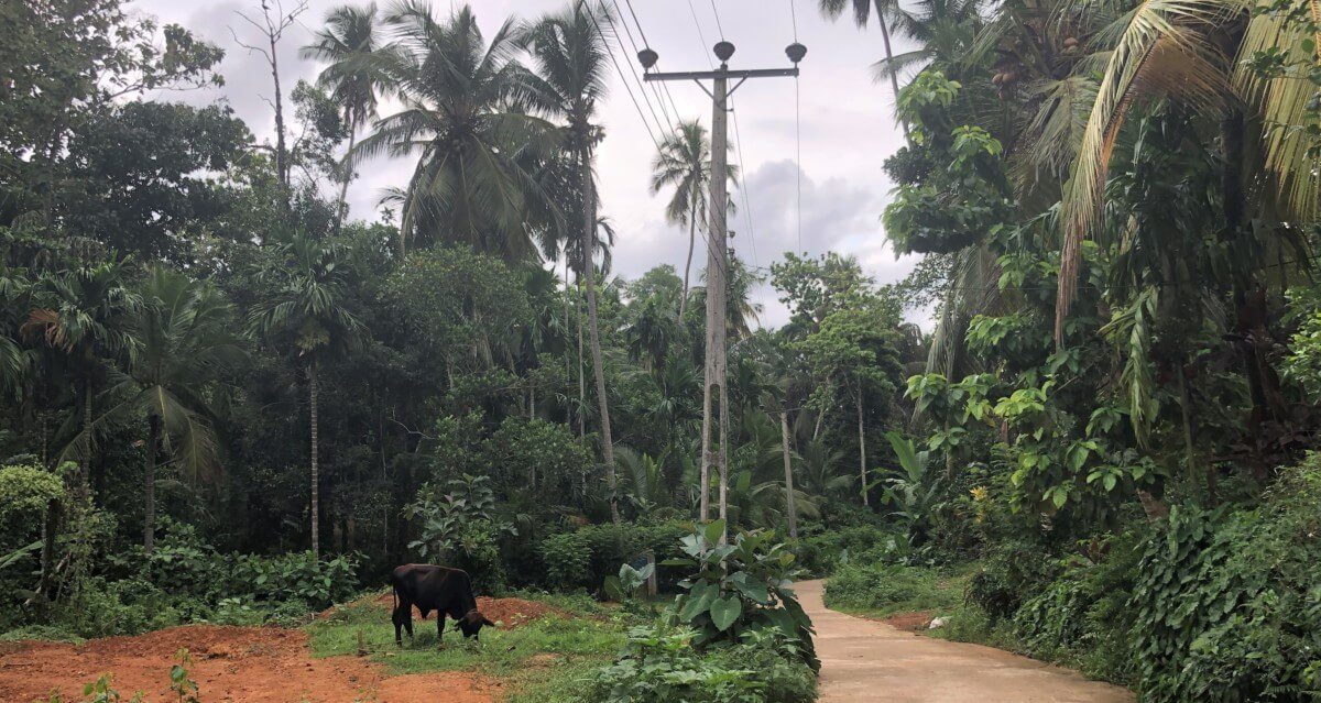 SriLanka Kuh Reiseblog