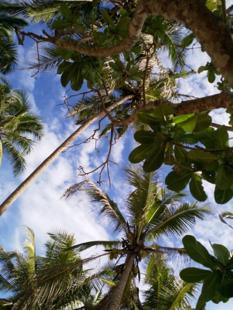Reiseplanung Rucksack Palmen