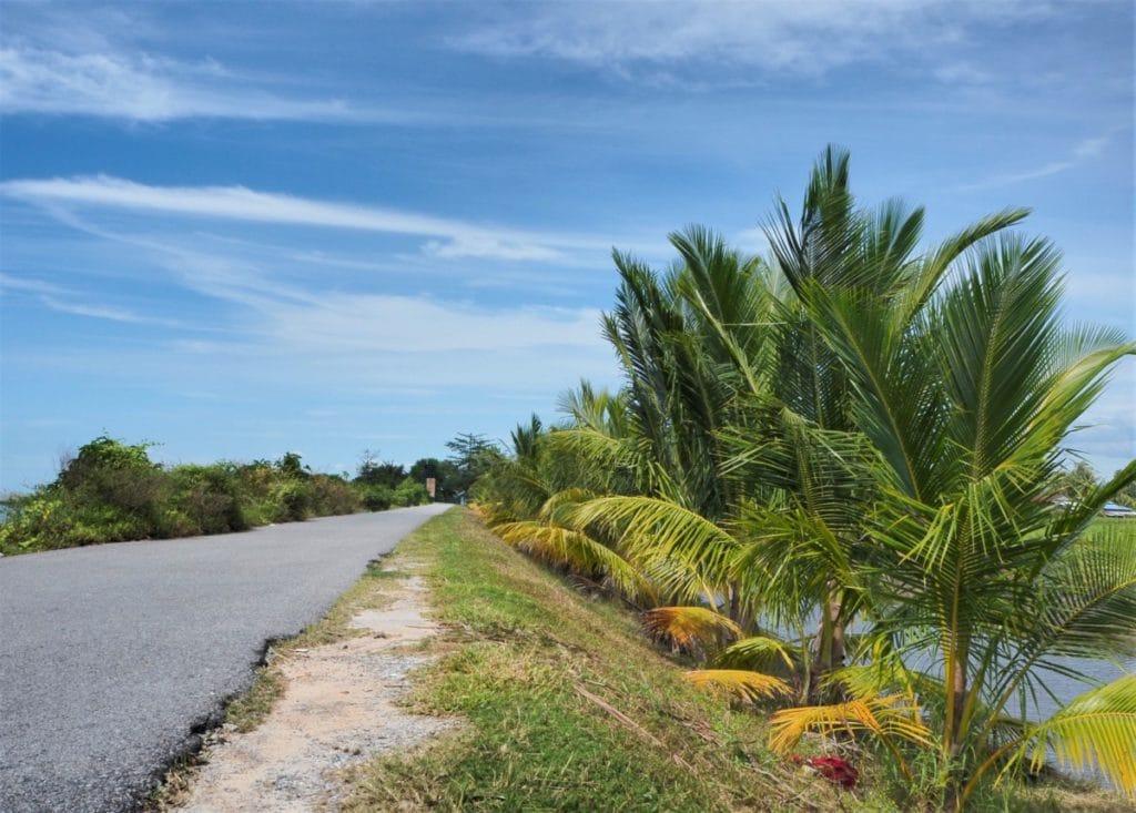 Reisebericht Malaysia Palmenweg