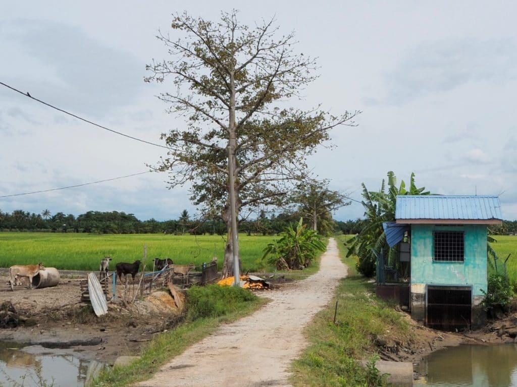 Reisebericht Malaysia abseits der Trampelpfade