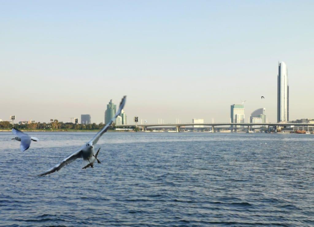 Reise nach Dubai Vogel im Flug