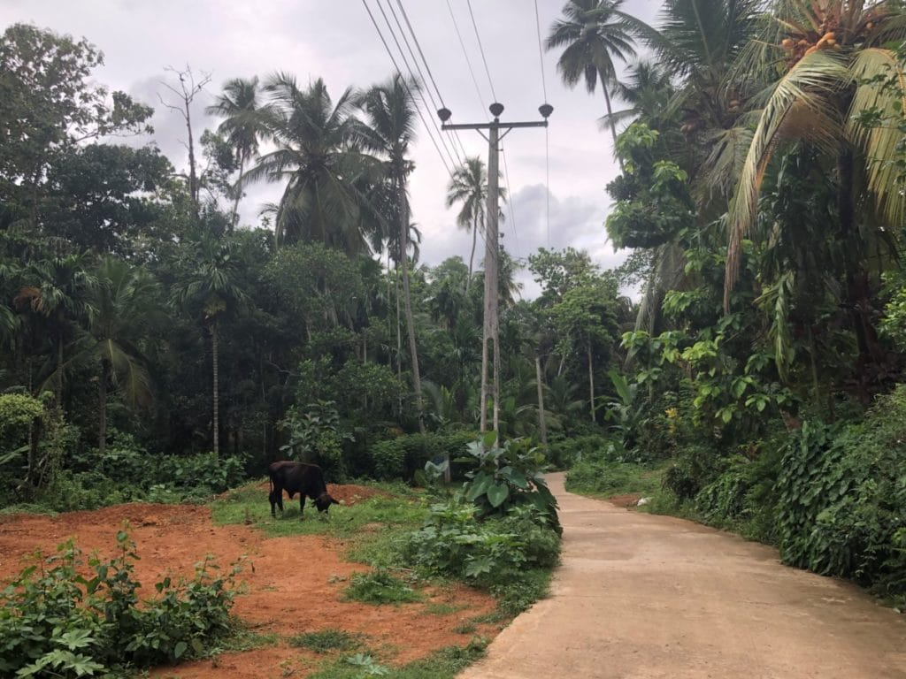 Backpacking in Sri Lanka abseits der Pfade