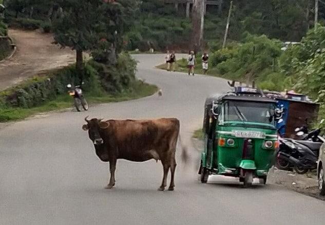 Rundreise Sri Lanka - Tuk Tuk und Kuh