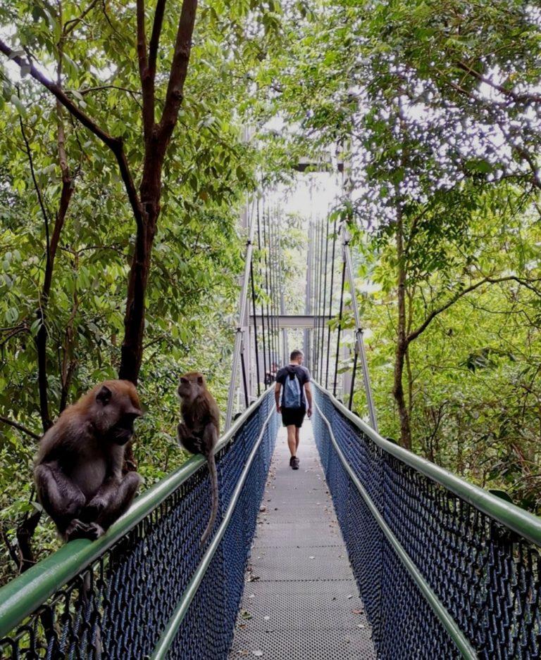Stopover Singapur Hängebrücke Affenbande