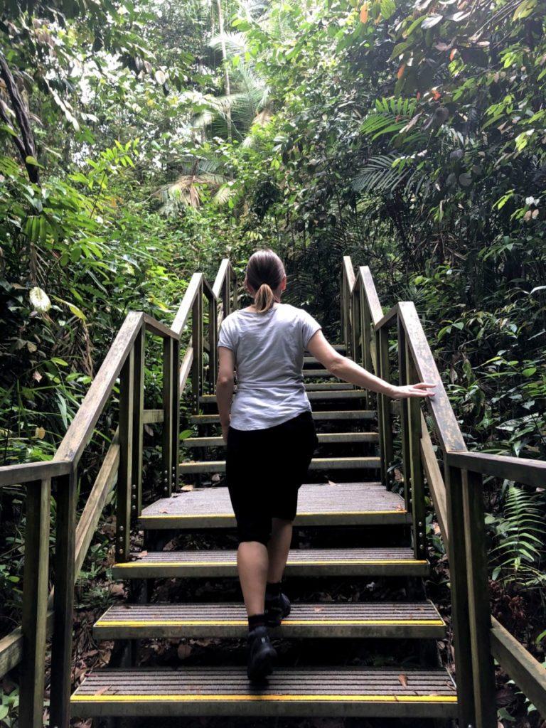 Stopover Singapur Wanderung Dschungel